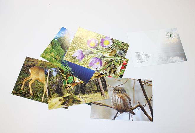 Печать почтовых открыток ярославль